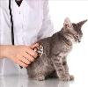 Ветеринарные клиники в Терекли-Мектебе